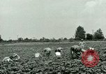 Image of German Prisoner of War Camp in United States United States USA, 1944, second 5 stock footage video 65675021139