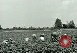 Image of German Prisoner of War Camp in United States United States USA, 1944, second 7 stock footage video 65675021139