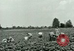 Image of German Prisoner of War Camp in United States United States USA, 1944, second 10 stock footage video 65675021139