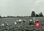 Image of German Prisoner of War Camp in United States United States USA, 1944, second 12 stock footage video 65675021139
