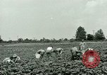 Image of German Prisoner of War Camp in United States United States USA, 1944, second 13 stock footage video 65675021139