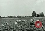 Image of German Prisoner of War Camp in United States United States USA, 1944, second 14 stock footage video 65675021139