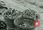 Image of German Prisoner of War Camp in United States United States USA, 1944, second 43 stock footage video 65675021139