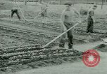 Image of German Prisoners of War United States USA, 1944, second 24 stock footage video 65675021148