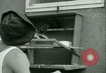Image of Prisoner trains birds at US operated POW camp United States USA, 1944, second 29 stock footage video 65675021176