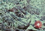 Image of Assault of hill South Vietnam, 1967, second 18 stock footage video 65675021191