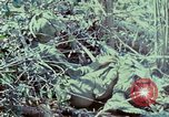 Image of Assault of hill South Vietnam, 1967, second 20 stock footage video 65675021191