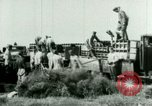 Image of German troops Russia, 1942, second 3 stock footage video 65675021215