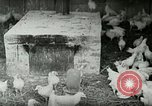 Image of Poultry farm Berea Kentucky United States USA, 1933, second 12 stock footage video 65675021269