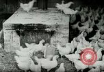 Image of Poultry farm Berea Kentucky United States USA, 1933, second 14 stock footage video 65675021269