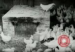Image of Poultry farm Berea Kentucky United States USA, 1933, second 15 stock footage video 65675021269