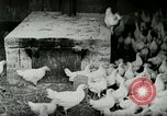 Image of Poultry farm Berea Kentucky United States USA, 1933, second 16 stock footage video 65675021269