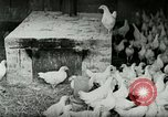 Image of Poultry farm Berea Kentucky United States USA, 1933, second 17 stock footage video 65675021269