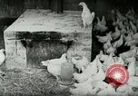 Image of Poultry farm Berea Kentucky United States USA, 1933, second 18 stock footage video 65675021269
