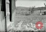 Image of Poultry farm Berea Kentucky United States USA, 1933, second 22 stock footage video 65675021269
