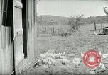 Image of Poultry farm Berea Kentucky United States USA, 1933, second 26 stock footage video 65675021269