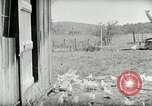 Image of Poultry farm Berea Kentucky United States USA, 1933, second 27 stock footage video 65675021269