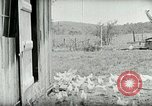 Image of Poultry farm Berea Kentucky United States USA, 1933, second 28 stock footage video 65675021269