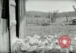 Image of Poultry farm Berea Kentucky United States USA, 1933, second 29 stock footage video 65675021269