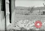 Image of Poultry farm Berea Kentucky United States USA, 1933, second 30 stock footage video 65675021269