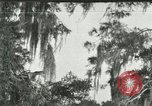 Image of wild birds United States USA, 1921, second 1 stock footage video 65675021531