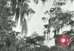 Image of wild birds United States USA, 1921, second 4 stock footage video 65675021531