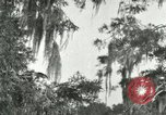 Image of wild birds United States USA, 1921, second 5 stock footage video 65675021531