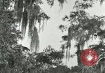 Image of wild birds United States USA, 1921, second 6 stock footage video 65675021531