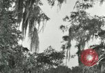 Image of wild birds United States USA, 1921, second 9 stock footage video 65675021531