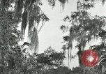 Image of wild birds United States USA, 1921, second 11 stock footage video 65675021531
