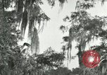 Image of wild birds United States USA, 1921, second 13 stock footage video 65675021531