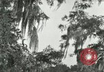 Image of wild birds United States USA, 1921, second 21 stock footage video 65675021531