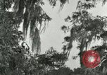 Image of wild birds United States USA, 1921, second 23 stock footage video 65675021531