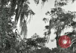 Image of wild birds United States USA, 1921, second 27 stock footage video 65675021531