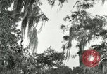 Image of wild birds United States USA, 1921, second 28 stock footage video 65675021531