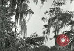 Image of wild birds United States USA, 1921, second 29 stock footage video 65675021531