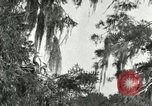 Image of wild birds United States USA, 1921, second 33 stock footage video 65675021531