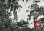 Image of wild birds United States USA, 1921, second 34 stock footage video 65675021531