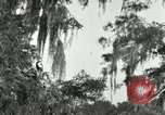 Image of wild birds United States USA, 1921, second 41 stock footage video 65675021531