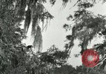 Image of wild birds United States USA, 1921, second 45 stock footage video 65675021531