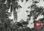 Image of wild birds United States USA, 1921, second 46 stock footage video 65675021531