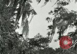 Image of wild birds United States USA, 1921, second 47 stock footage video 65675021531