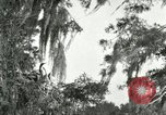 Image of wild birds United States USA, 1921, second 51 stock footage video 65675021531