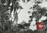 Image of wild birds United States USA, 1921, second 52 stock footage video 65675021531