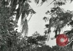 Image of wild birds United States USA, 1921, second 53 stock footage video 65675021531