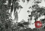 Image of wild birds United States USA, 1921, second 58 stock footage video 65675021531