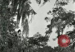 Image of wild birds United States USA, 1921, second 60 stock footage video 65675021531