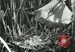 Image of wild birds United States USA, 1921, second 20 stock footage video 65675021532