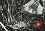 Image of wild birds United States USA, 1921, second 23 stock footage video 65675021532