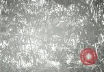 Image of wild birds United States USA, 1921, second 52 stock footage video 65675021532